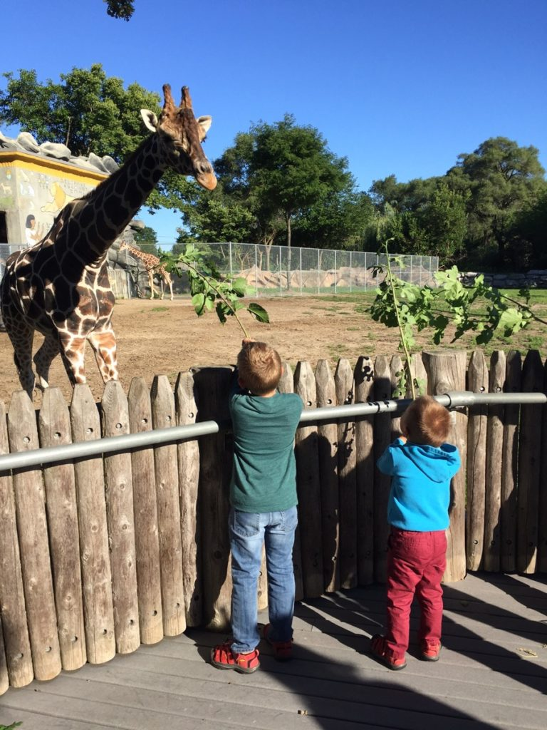 Detroit Zoo Giraffe Breakfast
